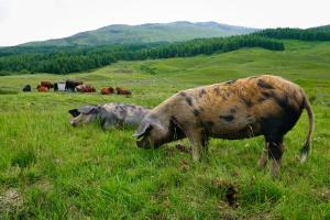dzīvnieku ferma